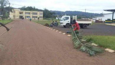 Photo de Sébé-Bricolo / Okondja : La mairie balaie les routes a l'aide de branches de palmiers