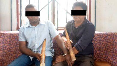 Photo de Mouila / Traficd'ivoire :UnPhilippin et son acolyte Gabonais pris en pleinflagrant délit